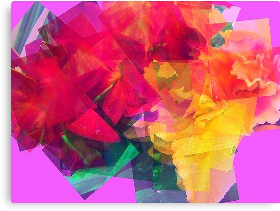 Mirage by Rachel Williams