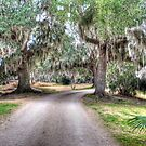 Avery Island Road by Diego  Re