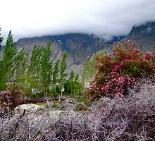 Winds of Ladakh - Nubra valley, India by ADZA2