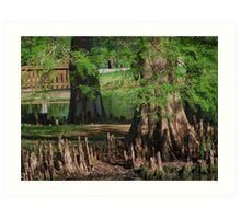 Cypress Nubs Art Print
