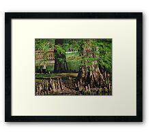 Cypress Nubs Framed Print