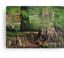 Cypress Nubs Metal Print
