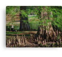 Cypress Nubs Canvas Print