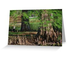 Cypress Nubs Greeting Card