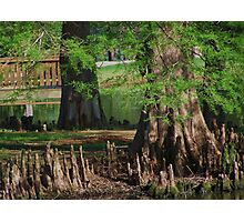 Cypress Nubs Photographic Print