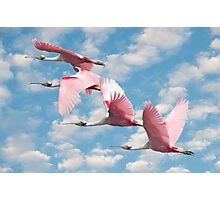 """""""Power Of Pink"""" - roseate spoonbills flying Photographic Print"""