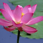 Lotus Inspirations by NatureGreeting Cards ccwri