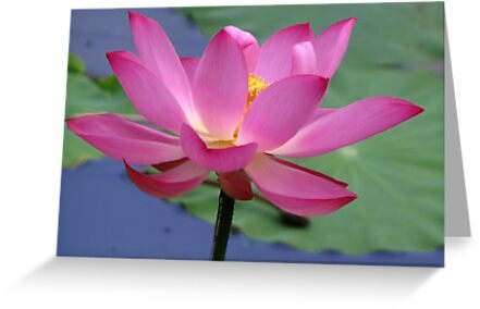 Lotus Inspirations by NatureGreeting Cards ©ccwri