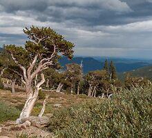 Timberline by Greg Birkett