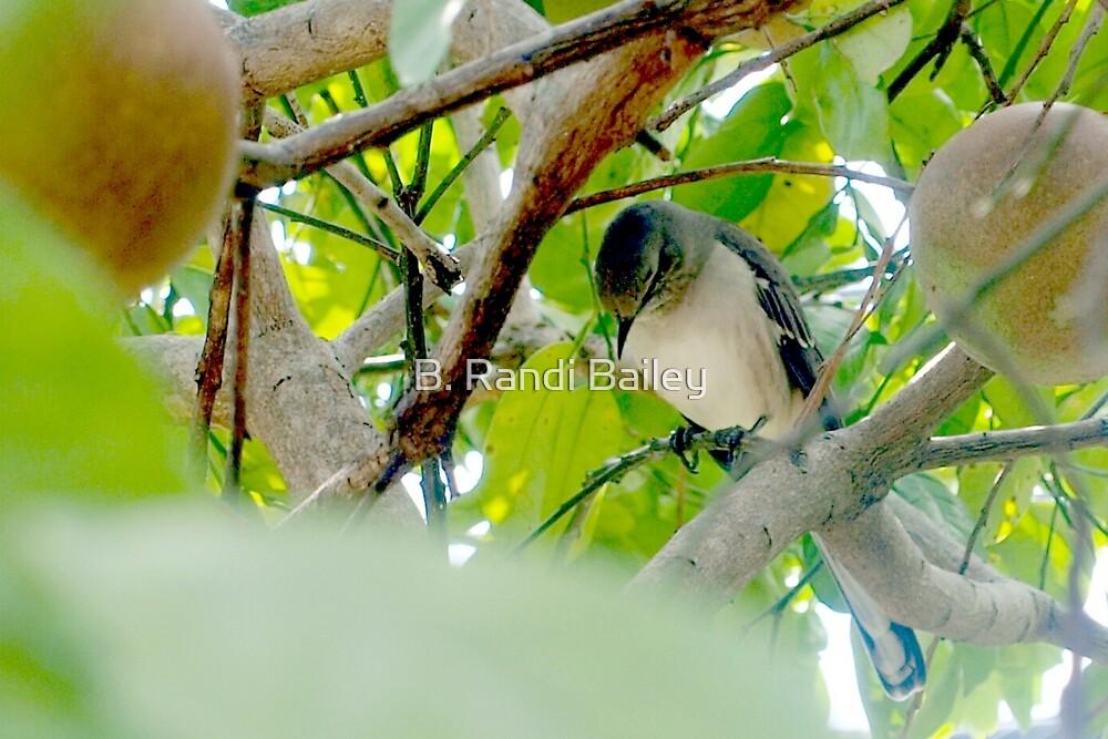 Mockingbird in my fruit tree by ♥⊱ B. Randi Bailey