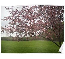 Pink Tree - Green Grass Poster