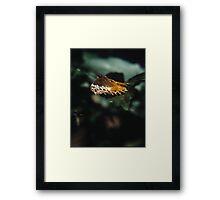 Moth 1. Framed Print