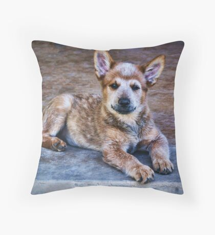 Bandit Throw Pillow