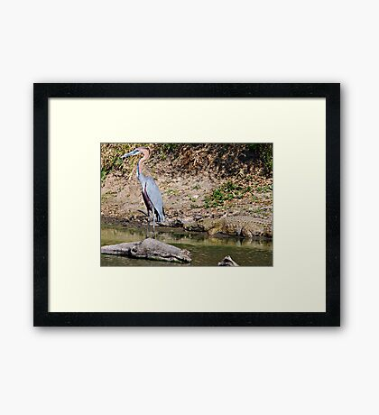 Lunch? I Think Not  Framed Print
