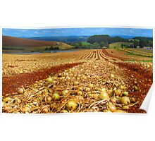 Flowerdale Onions Drying Poster