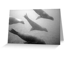 Sea Lion Squadron Greeting Card