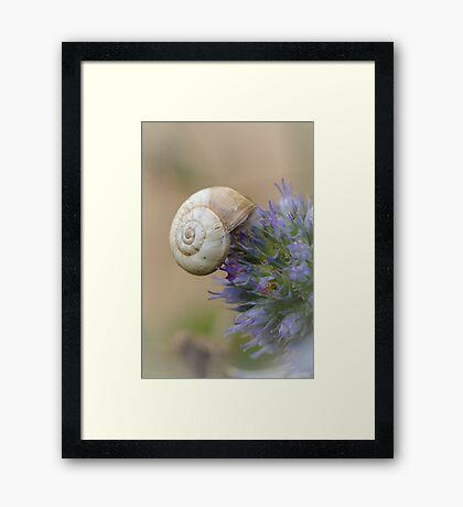 Snail on Sea Holly Flower Framed Print