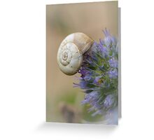 Snail on Sea Holly Flower Greeting Card