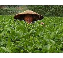 in a tea plantation Photographic Print