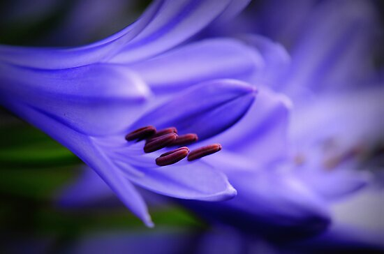 Feeling Blue  by Edge-of-dreams