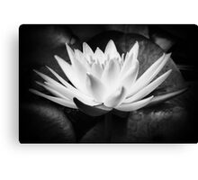 The waterlily Canvas Print