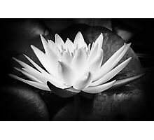 The waterlily Photographic Print