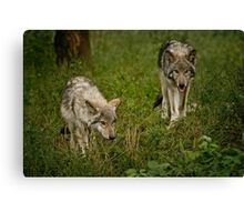 They Are Getting Big Canvas Print