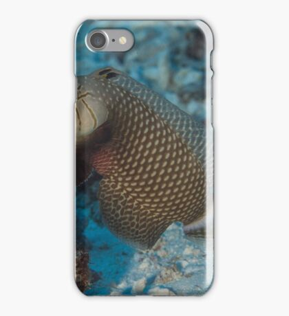 Rockmover Wrasse iPhone Case/Skin