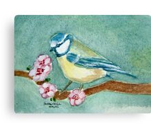 Blue Tit among the blossom Canvas Print