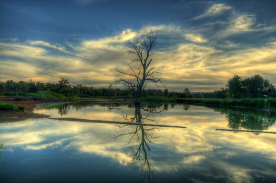 Wetland Dreaming Trees - Wonga Wetlands, Albury ,  Australia - The HDR Experience by Philip Johnson