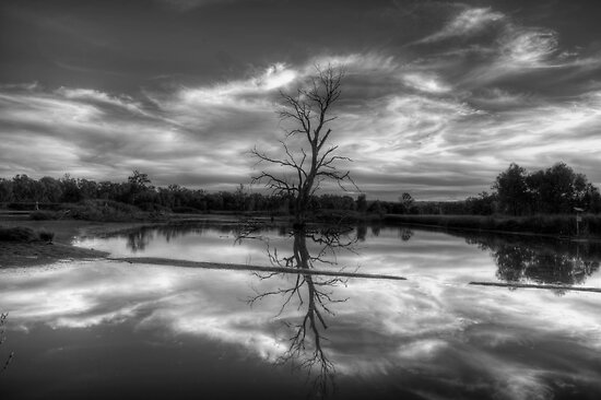 Wetland Dreaming (Monochrome) - Wonga Wetlands, Albury ,  Australia - The HDR Experience by Philip Johnson