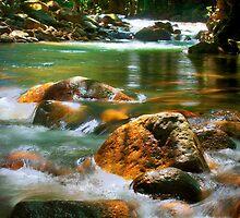 Alligator Streaming - Boulder Creek, Tully NQ by Giovanna Devlin