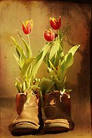 Tulips in Boots by Elaine Teague