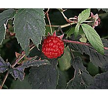 The Raspberry Photographic Print
