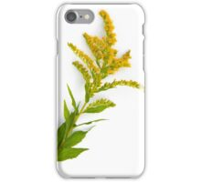Goldenrod Flower iPhone Case/Skin
