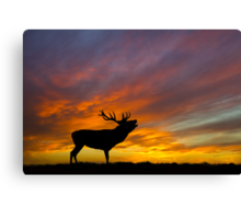 Roaring Stag at Sunset Canvas Print