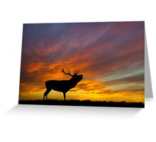 Roaring Stag at Sunset Greeting Card