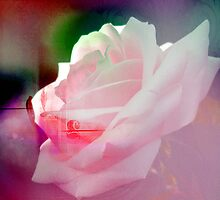 WHITE ROSE. by Vitta