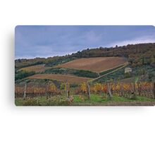 Vineyard Castellina in Chianti Canvas Print