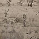 African Landscape by Mark Murphy