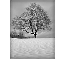Mother Natures Work Photographic Print