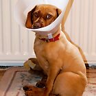 Why are you staring at me, doesn't everyone wear a lampshade from time to time? by nigelphoto