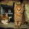 KITTENS - FEATURED IN THIS GROUP