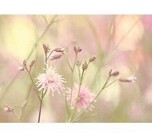 Pastel garden Photographic Print