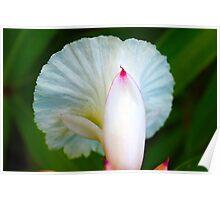 Flora blanco  Poster