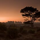 Sunrise Over The New Forest by Lin-Ann Anantharachagan