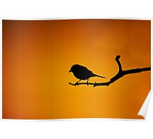 BIRD SILHOUETTE IN SUNSET ON A BRANCH Poster