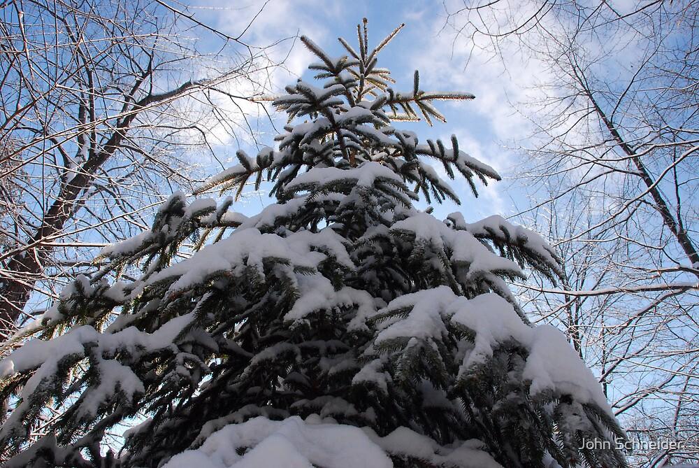 Evergreen & White by John Schneider