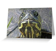 Florida red belly turtle up close! Greeting Card