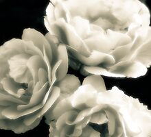 Three Roses by Mitch Labuda